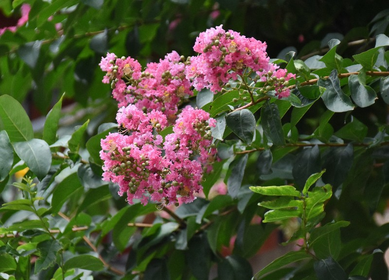 f:id:flowerTDR:20200727090152j:image