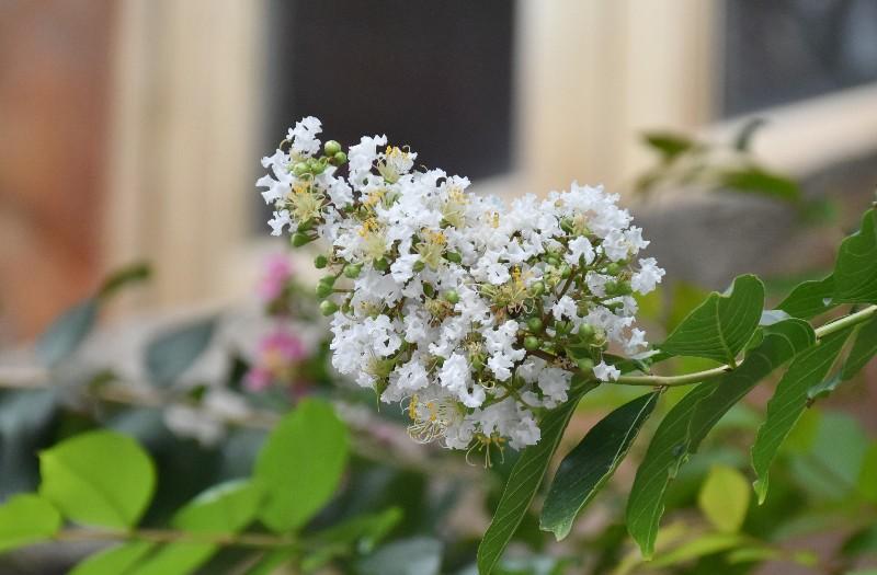 f:id:flowerTDR:20200727090837j:image