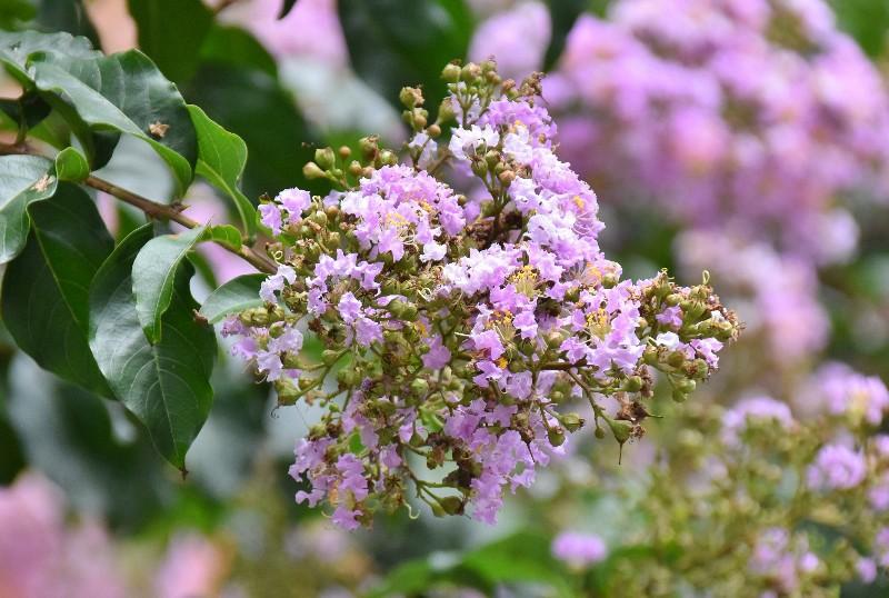 f:id:flowerTDR:20200727090844j:image