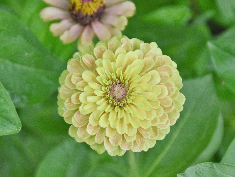 f:id:flowerTDR:20200728091647j:image