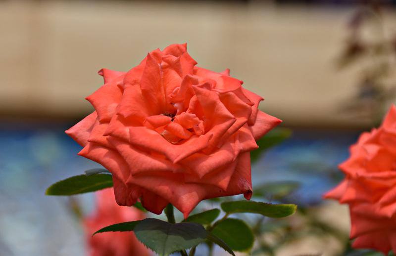 f:id:flowerTDR:20200730090949j:plain