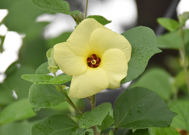 f:id:flowerTDR:20200731082336j:plain