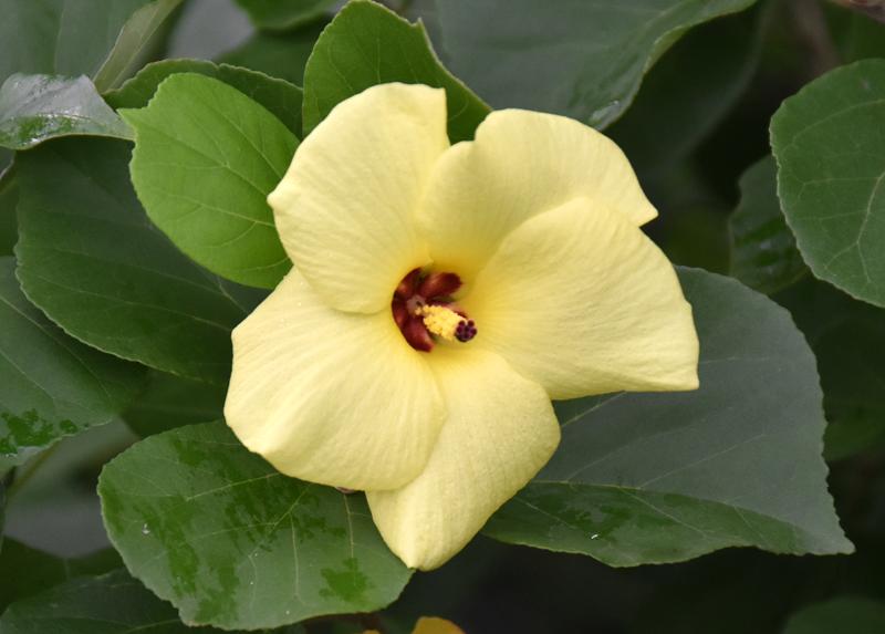 f:id:flowerTDR:20200731082345j:plain