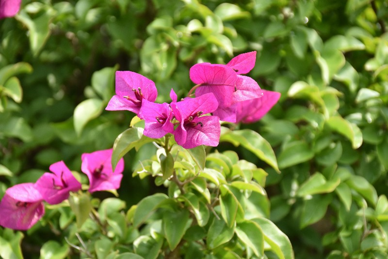 f:id:flowerTDR:20200804091859j:image