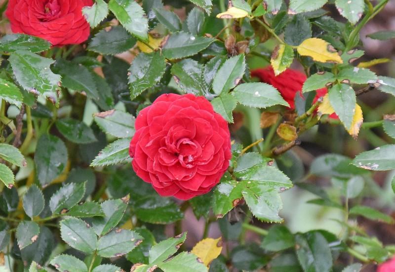 f:id:flowerTDR:20200805092202j:image