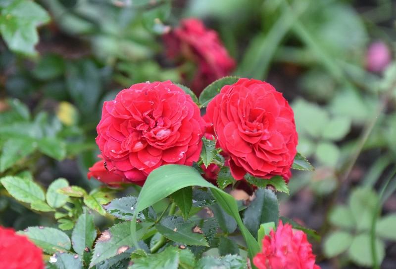 f:id:flowerTDR:20200805092211j:image