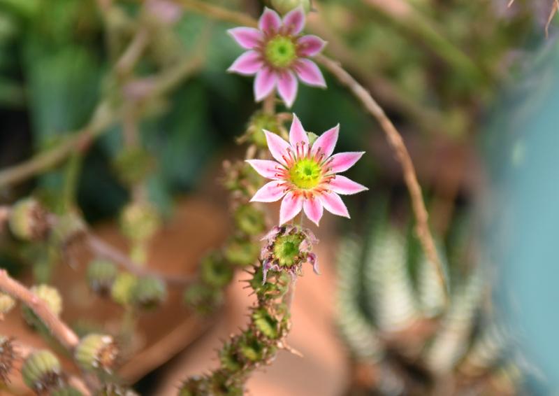 f:id:flowerTDR:20200807005757j:plain