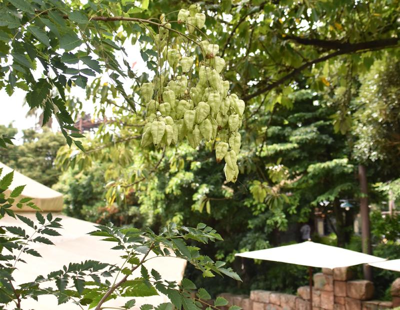 f:id:flowerTDR:20200808193920j:plain
