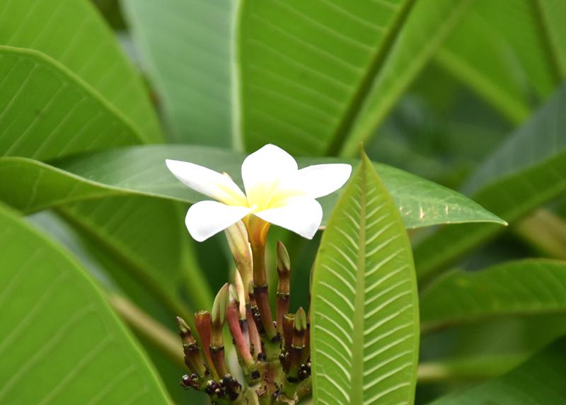 f:id:flowerTDR:20200809234134j:plain