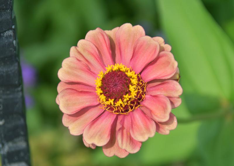 f:id:flowerTDR:20200816200606j:plain