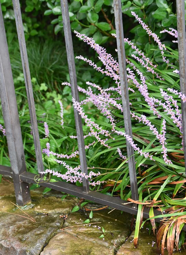 f:id:flowerTDR:20200819071418j:plain