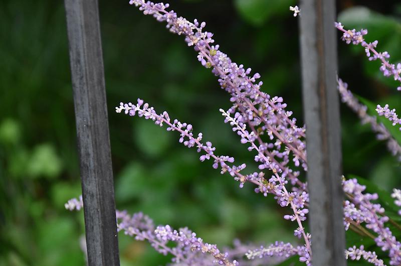 f:id:flowerTDR:20200819071428j:plain