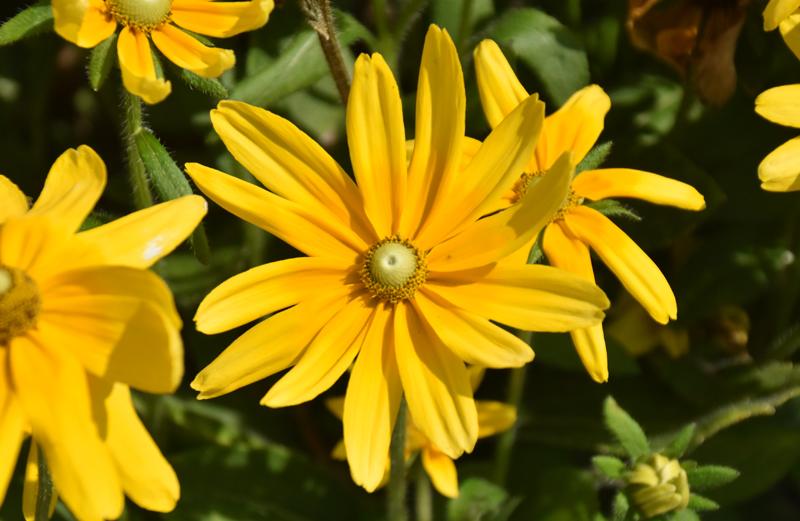 f:id:flowerTDR:20200821083147j:plain