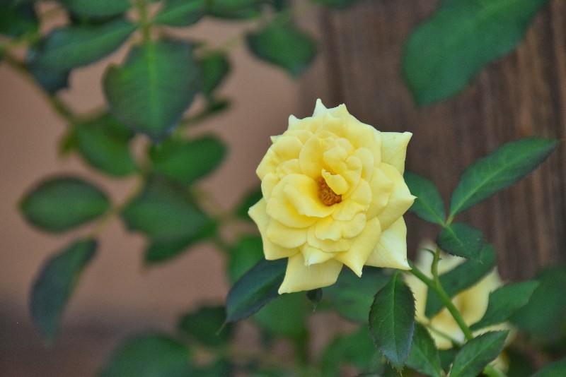f:id:flowerTDR:20200823085500j:image
