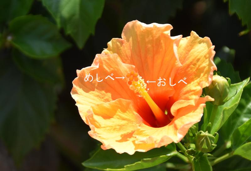 f:id:flowerTDR:20200823201714j:plain