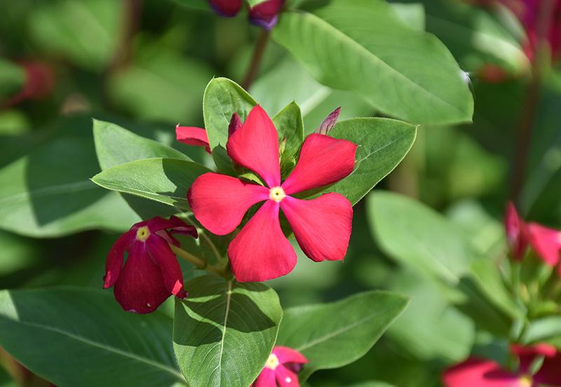 f:id:flowerTDR:20200827121825j:plain