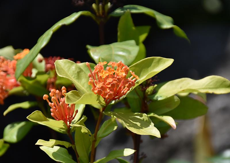 f:id:flowerTDR:20200828232554j:plain