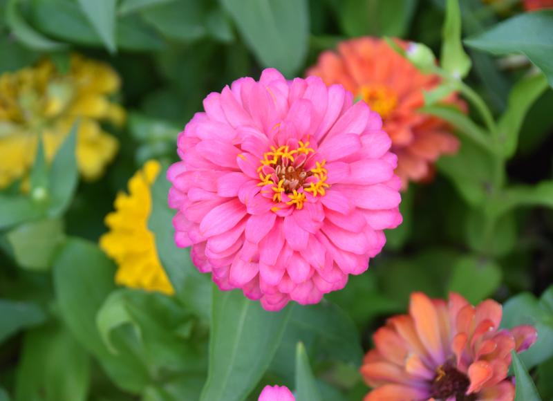 f:id:flowerTDR:20200830075722j:plain