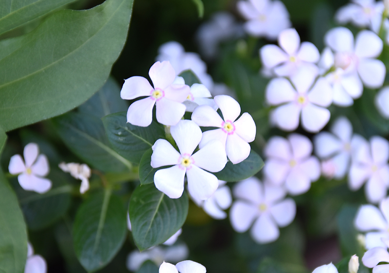 f:id:flowerTDR:20200830075730j:plain