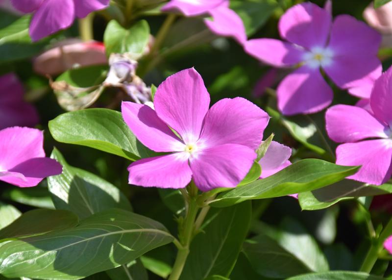 f:id:flowerTDR:20200902083303j:plain