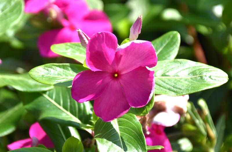 f:id:flowerTDR:20200902083322j:plain