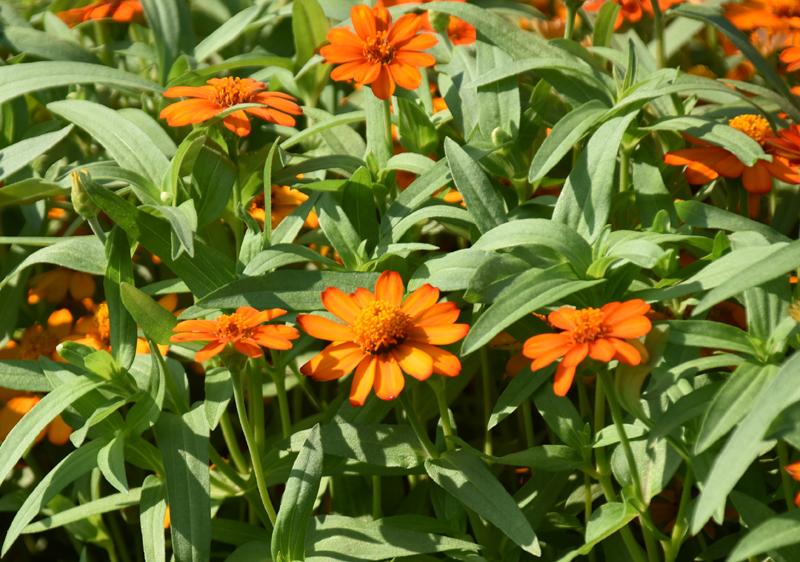 f:id:flowerTDR:20200903083231j:plain