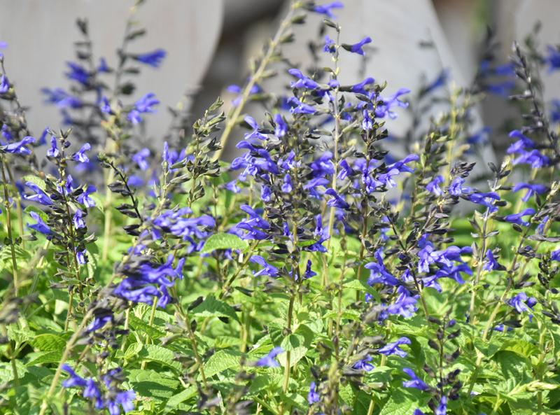 f:id:flowerTDR:20200903083239j:plain