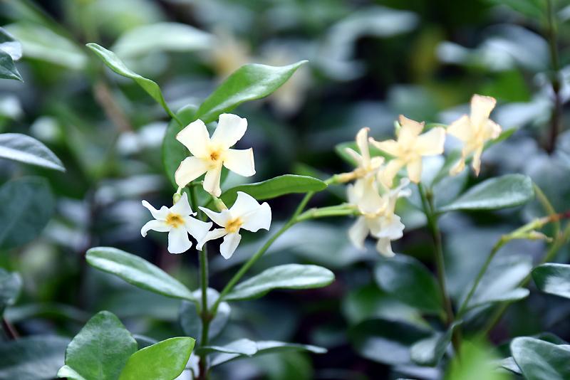 f:id:flowerTDR:20200906080208j:plain