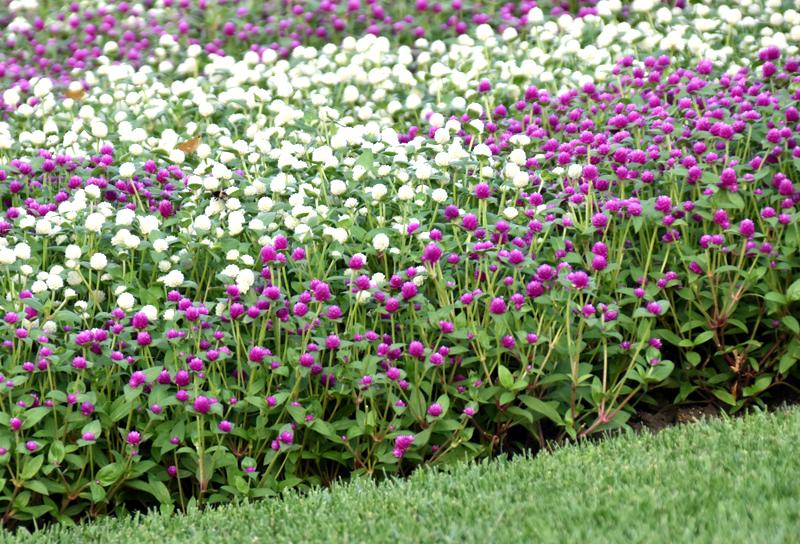 f:id:flowerTDR:20200907003447j:plain