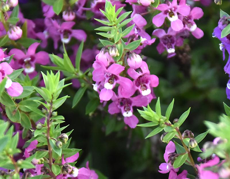 f:id:flowerTDR:20200908065719j:plain