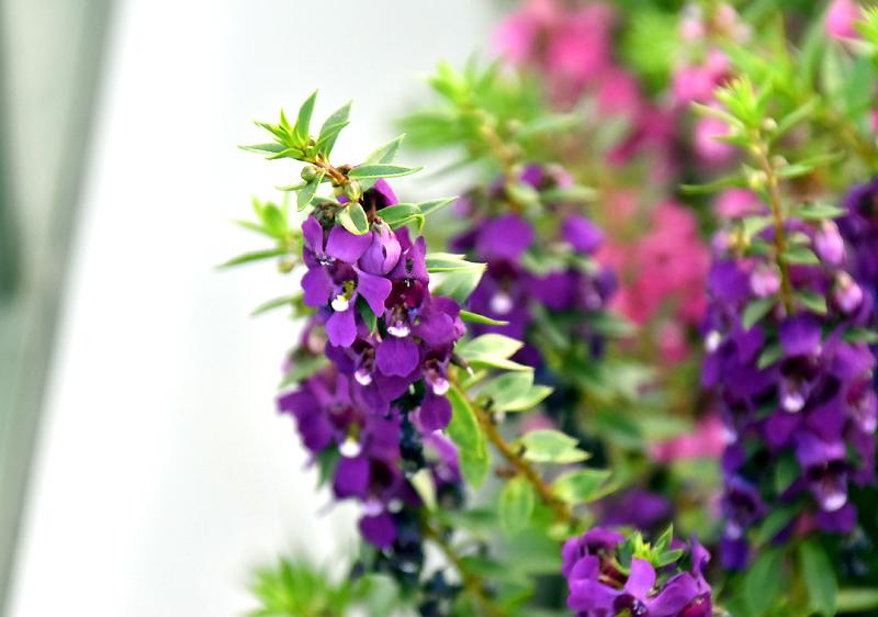f:id:flowerTDR:20200908065734j:plain