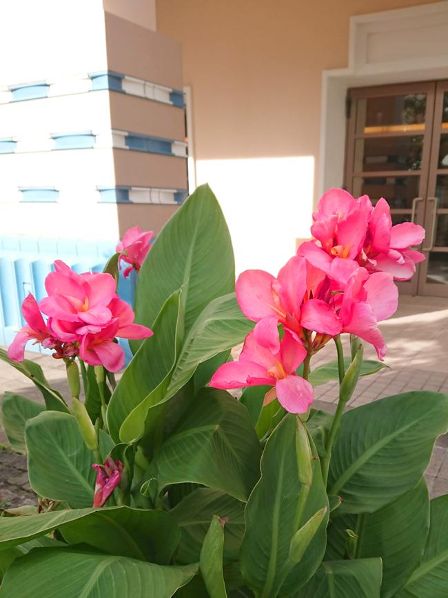 f:id:flowerTDR:20200913213452j:plain