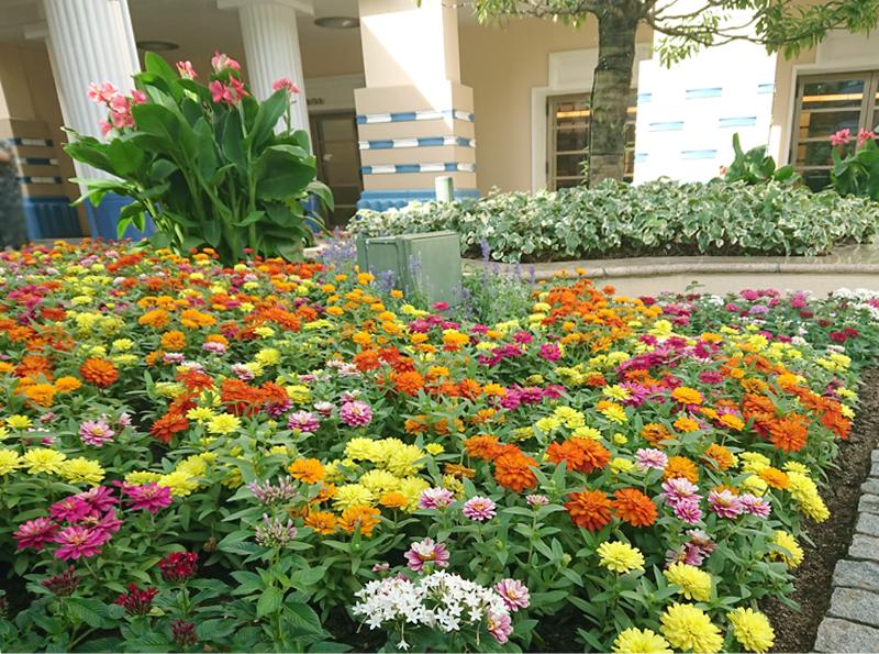 f:id:flowerTDR:20200913213502j:plain
