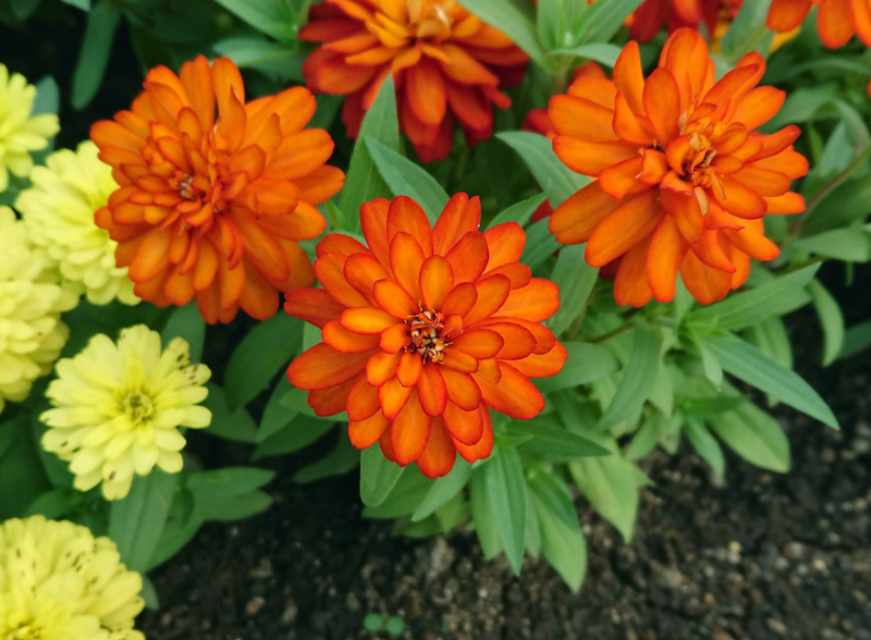 f:id:flowerTDR:20200913213519j:plain