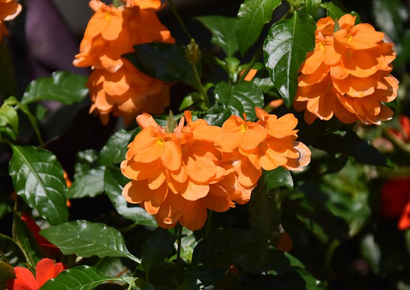 f:id:flowerTDR:20200915085707j:plain