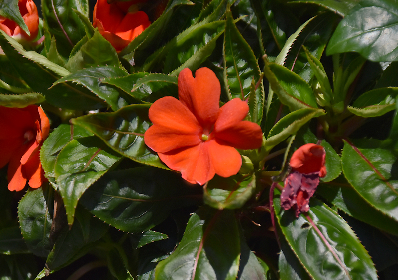f:id:flowerTDR:20200915085800j:plain