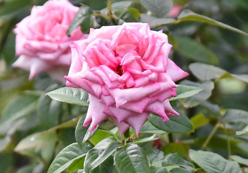 f:id:flowerTDR:20200916090822j:plain