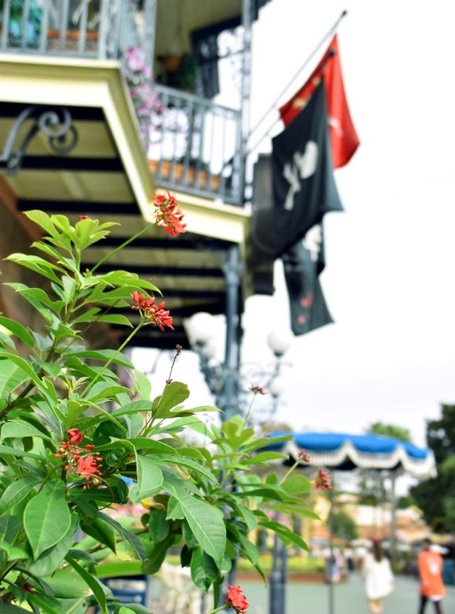 f:id:flowerTDR:20200917071612j:plain