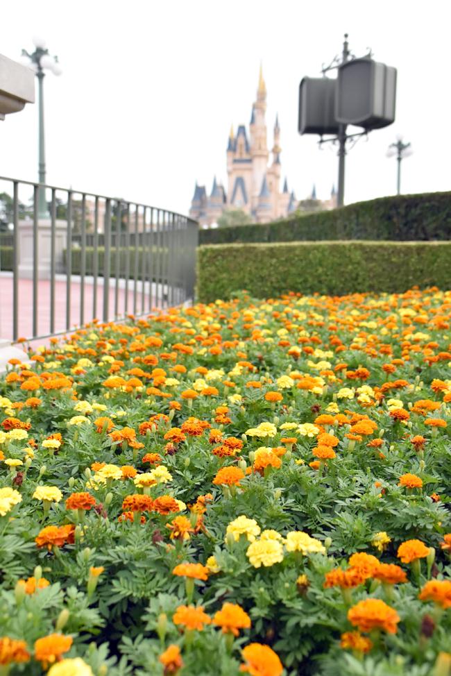 f:id:flowerTDR:20200918081757j:plain