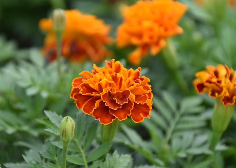 f:id:flowerTDR:20200918081814j:plain