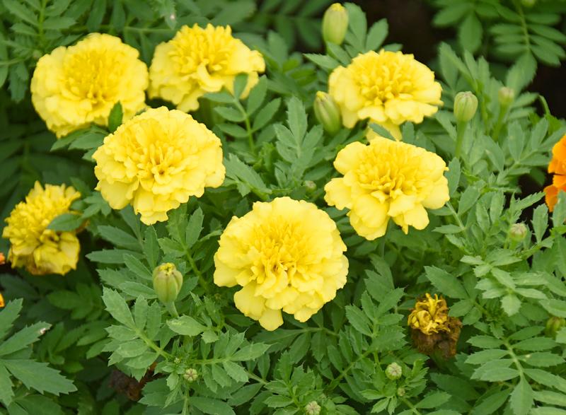 f:id:flowerTDR:20200918081829j:plain