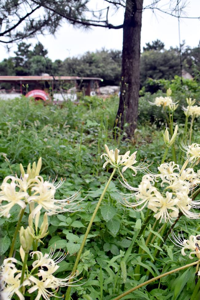 f:id:flowerTDR:20200924100306j:plain