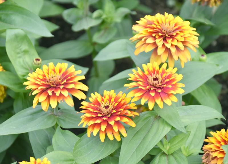 f:id:flowerTDR:20200925232601j:plain
