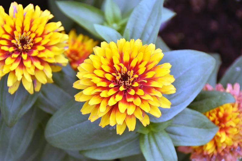 f:id:flowerTDR:20200925232613j:plain
