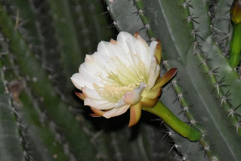 f:id:flowerTDR:20201001090404j:image