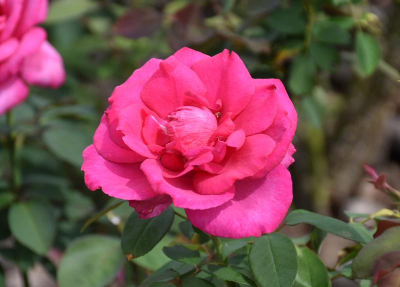 f:id:flowerTDR:20201003081616j:plain