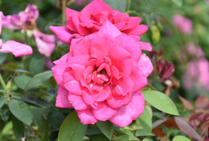 f:id:flowerTDR:20201003081633j:plain
