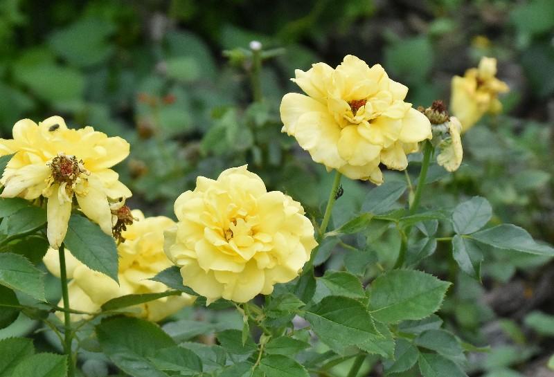 f:id:flowerTDR:20201004101514j:image
