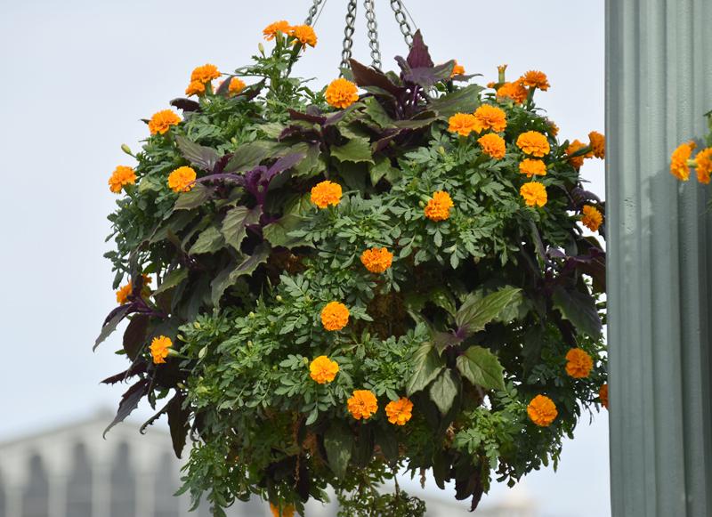 f:id:flowerTDR:20201005081905j:plain