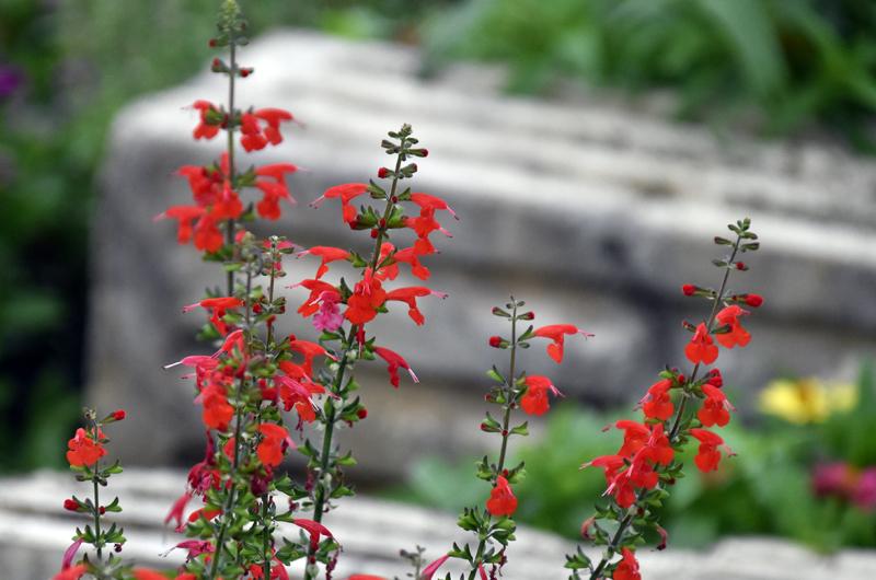 f:id:flowerTDR:20201010085609j:plain